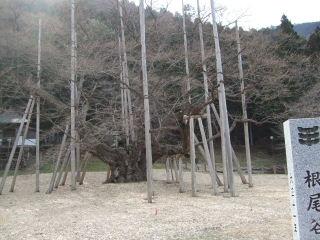 2010_03170008.JPG